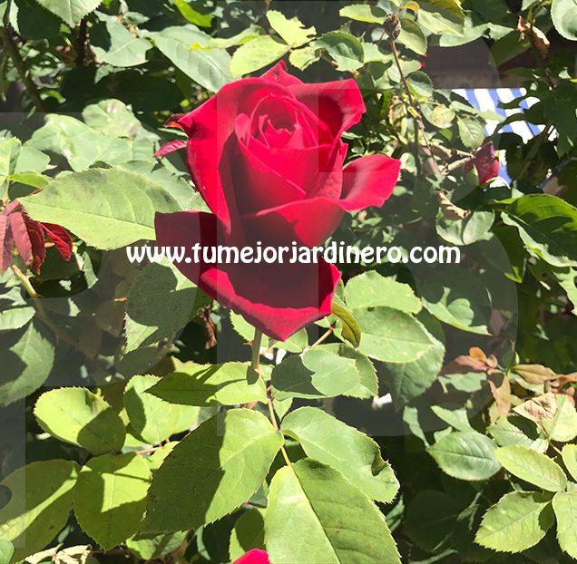 Jardineros en Cubelles - Jardineros en Cunit - Jardinero en Calafell - Jardinero en El Vendrell - Jardinero en Bellvei